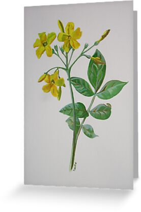 Carolina Jasmine by taiche