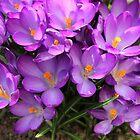 Finally - Spring Has Come by karina5