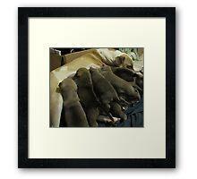 jerzy's herd Framed Print