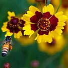 Honey Bee and Yellow Flower by Mukesh Srivastava