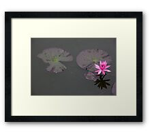 Lonely Lotus Framed Print