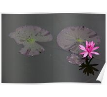 Lonely Lotus Poster