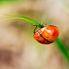 ladybutt .. i mean BUG :) by Julia Goss