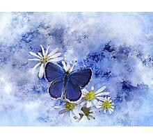 Little Blue Photographic Print