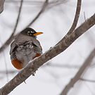 Winter Robin Bum by Benjamin Brauer