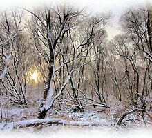 Snowy branches by peaky40