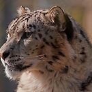 Snow Leopard Portrait by JMChown
