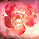 A Rose For You by Pat Moore