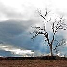 dead oak over a cemetery by leftysphotos