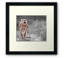 The Roar Framed Print