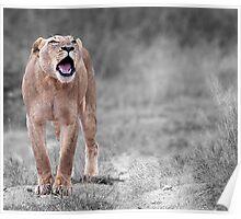 The Roar Poster
