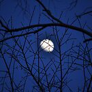 Hidden Moon by MaryLynn
