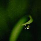 Morning tear by Su Walker