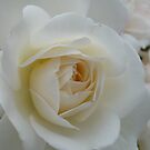 Purity by DEB CAMERON