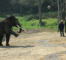 Elephant playing soccer by Janette Anderson