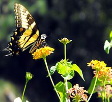 Eastern Tiger Swallowtail by WhiteOaksArt