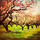 The orchard by jenndiguglielmo
