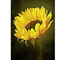Petals Of A Sunflower. Photographic Print