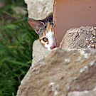 Shy cat at Girona by Esther  Molin