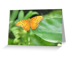 Male Cruiser Butterfly Greeting Card