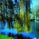 Beautiful weeping willow tree   by Dawn M. Becker