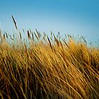 Blue Sky, Long Grass by Dominick J. Hewitt