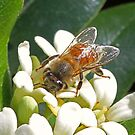 Spring-pollen-bees! by jozi1