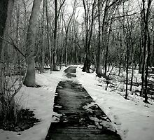Wintery Walk by shutterbugg73