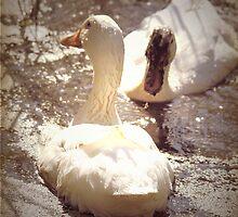 Two Little Ducks by yolanda