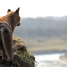 Red Fox overlooking his kingdom by DutchLumix