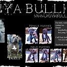 KuYa Bullies Puppies by AdJuStCreations