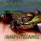 Amphibians featured member banner by Vanessa Serroul