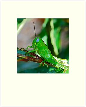 Green Menace by Penny Smith
