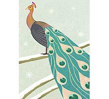 winter christmas peacock Photographic Print