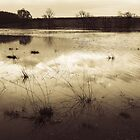 Derwent in Flood by pemanajo