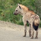 Juvenile Spotted Hyena by Hannah Shaw