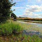 Royal Military Canal, Appledore by Liz Garnett