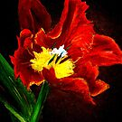 The Red Tulip by  Janis Zroback