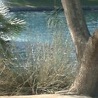 NATURAL BEAUTY- BEAUTY OF WATER & TREES by Sherri     Nicholas