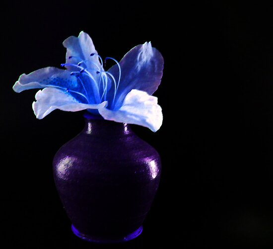 FLOWER IN A VASE by gracestout2007