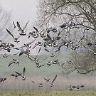 137 Birds by Henri Ton