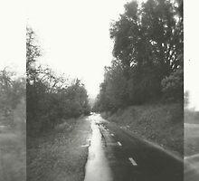 rainy path. by Stephanie Welling
