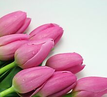 Pink Tulip Bouquet by MindyLinford