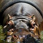 Hippo by JennyLee