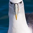 White-capped Albatross by Kimball Chen