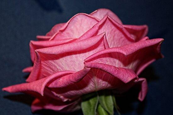 Plump & Pink by Julesrules