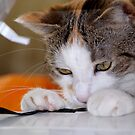 How to Disturb the Sewing ... by vbk70