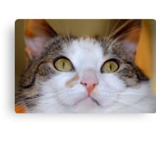 You can trust me, I am a good cat :) Canvas Print