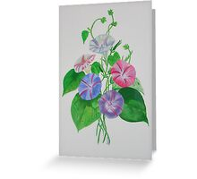 A Morning Glory Greeting Card