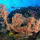Barney's reef by Steve Jones